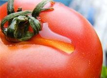 Какая разница между томатом и помидором? Что вкуснее томат или помидор.