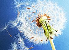Как в природе распространяются семена?