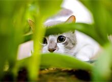 Как кошки стали домашними животными?