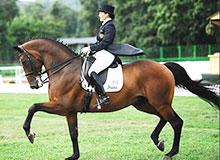 Почему на лошадях ездят в седле?