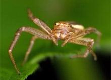 Какие пауки ядовиты?