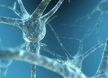 Почему у нас две нервные системы?