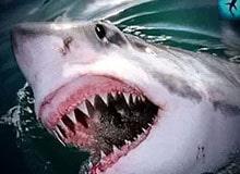 Похожи ли зубы человека на зубы животных?