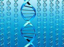 Что такое гены?