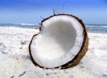 Где появился кокосовый орех?
