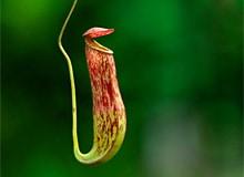 Что такое «просто ждущие» растения-хищники?