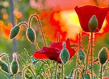 Могут ли цветы угадывать время?