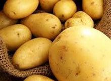Как картофель попал в Россию?