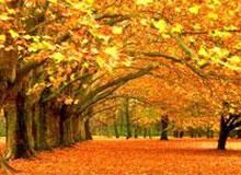 Откуда пошло слово октябрь?