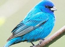 Существует ли «синяя птица»?
