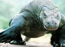 Что такое сухопутный крокодил?