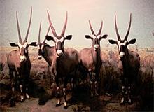 Какие животные называются антилопами?