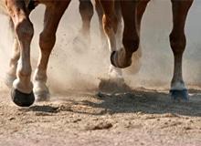 Зачем лошади нужны копыта?