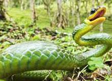 Как перемещается змея?
