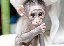 Каких животных называют четырехрукими?