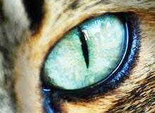 Почему глаза у кошки светятся?