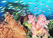 Как образуется коралловый риф?