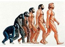 Что такое теория Дарвина?