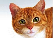 Как животные получили свои названия?