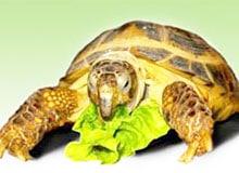 Чем питаются черепахи?