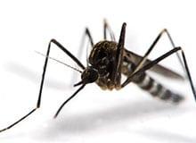Куда деваются зимой комары?