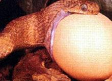 Чем питаются змеи?