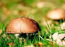 Откуда берутся грибы?