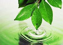 Что такое охрана окружающей среды?