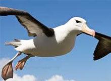 Какая из летающих птиц самая-самая?