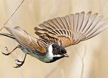 Почему птицы контролируют свою территорию?