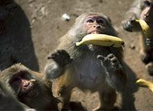 Могут ли животные руководствоваться разумом?