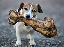 Почему собаки зарывают кости?