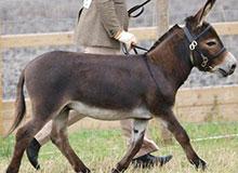 Какая разница между ослом и ишаком?