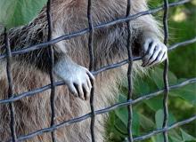 Как наказывают животных?