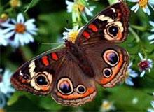 Много ли насекомых существует на земле?