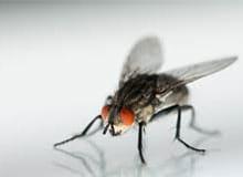 Чем питаются мухи?