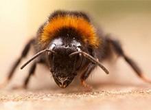 Что происходит с пчелами зимой?