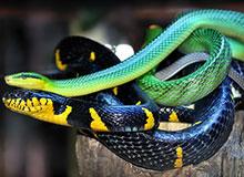 Почему у змей нет ног?