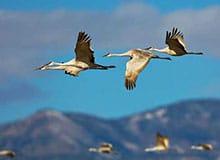 Какие птицы улетают на юг?