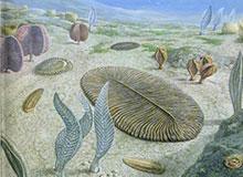 Какое животное первым появилось на суше?