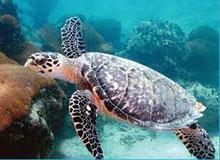 Есть ли у черепахи голос?