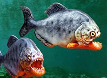 Чем питаются рыбы?