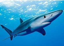Где живут акулы?