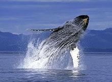 Какой кит самый большой?