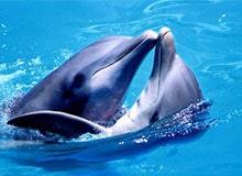 Что такое дельфин?