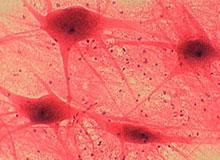 Что такое клетки?