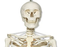 Зачем нам скелет?