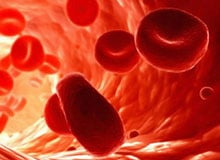 Сколько крови в нашем теле?