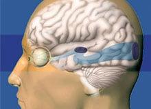 Каким образом мозг помогает видеть?