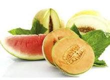 Как растут арбуз и дыня?